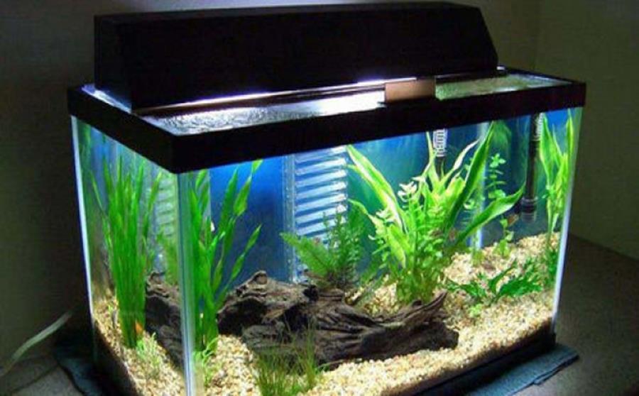 Cách chọn bể cá đúng phong thủy